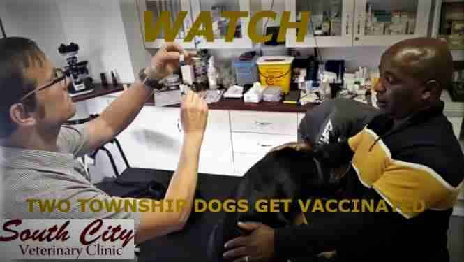 Vaccination dog video