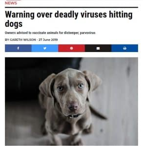 Vet warns over dog virus